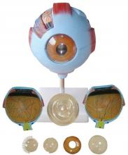 3D Eye Anatomy Mould